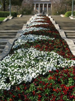 red and white pansy chevrons at Samford