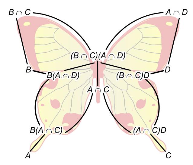 2000px-Butterfly_lemma.svg