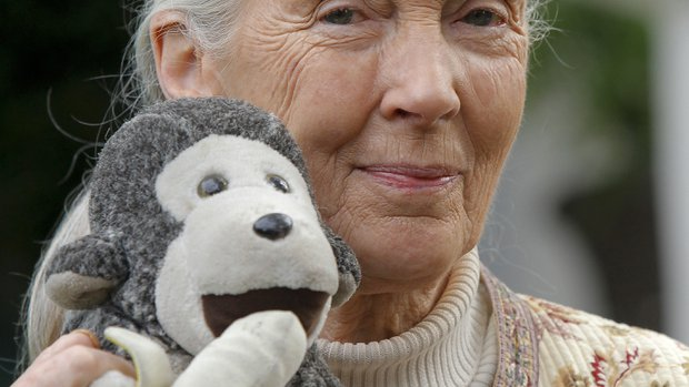 Jane Goodall Institute launches campaign for new solar array for chimps