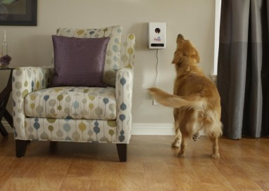 Top 5 Pet Technology Innovations