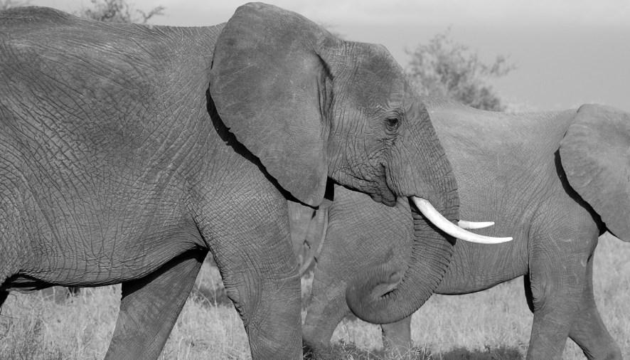 Elephant Rescue: U.S. Sanctuaries
