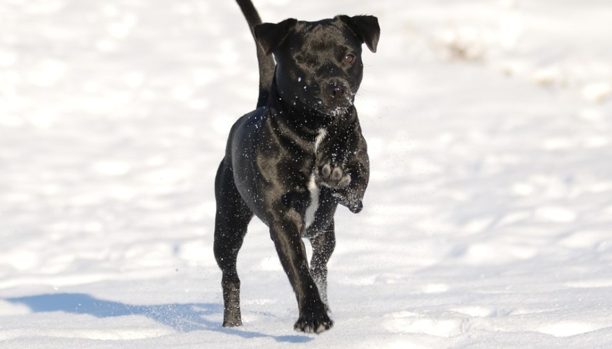 Cold Weather Woes for Pets