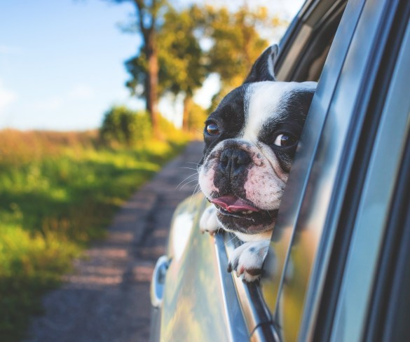 Tips for the Dog Days of Summer