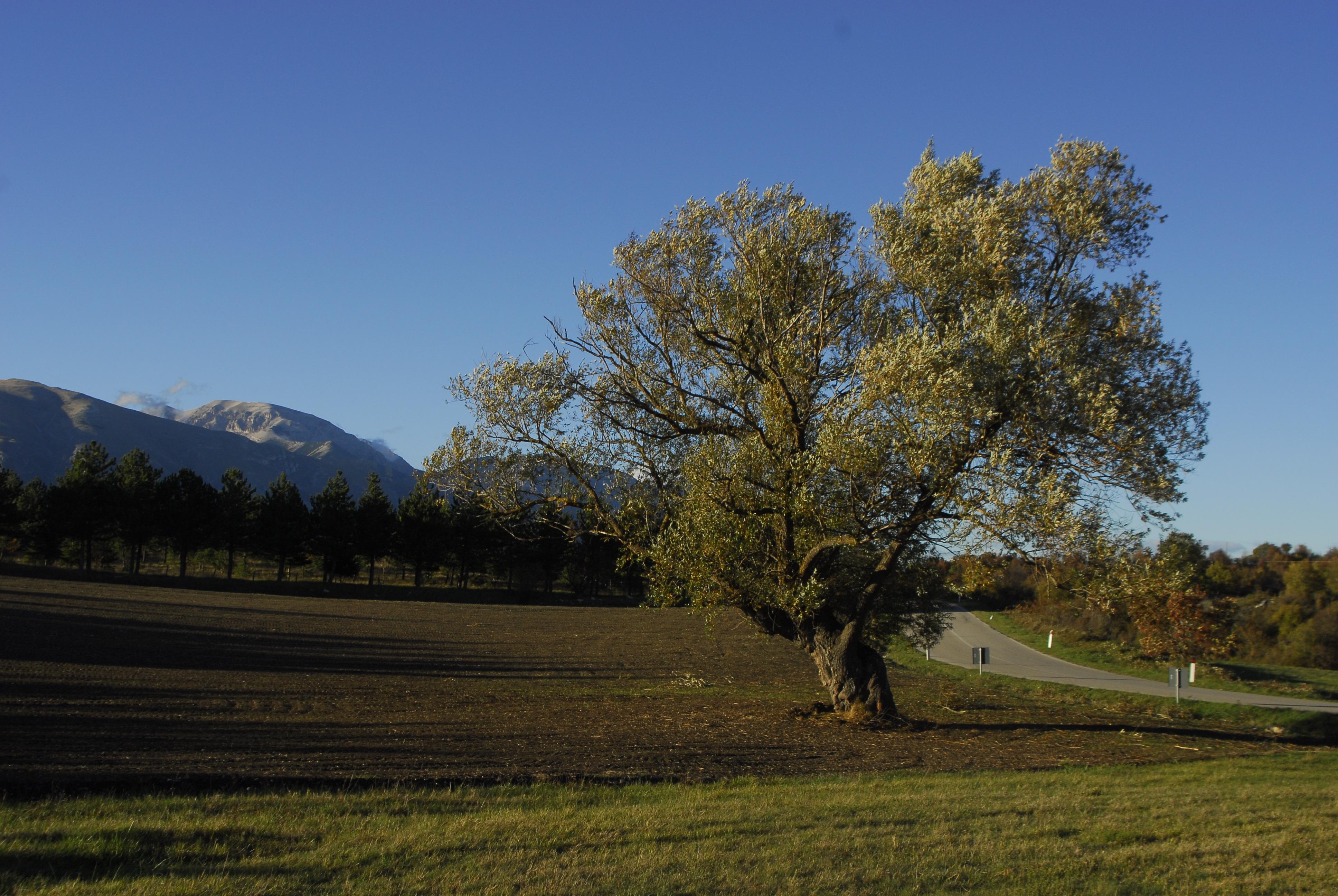 Foto di Valentina Perniciaro _ A te, mio albero, radici profonde _
