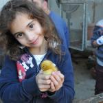 פינת ליטוף בצפון - ברווזים בכפר