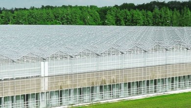 Photo of Lipetsk greenhouses on basalt substrate announced plans for expansion