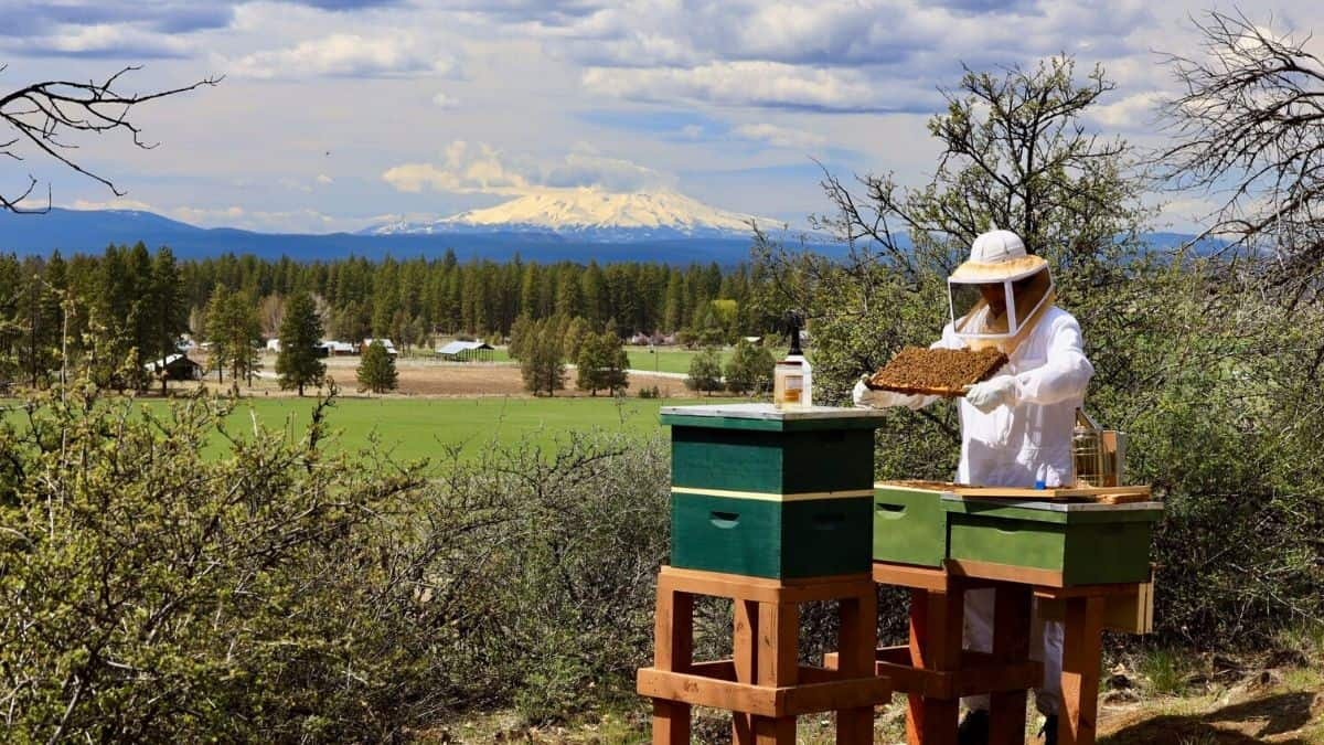 A Basaltic Farms bee tender with majestic Mt. Shasta in the background!