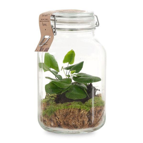Hartjesvaren in weckpot van Green Lifestyle Store