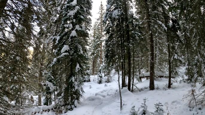 Monarch Lake, Snowshoeing