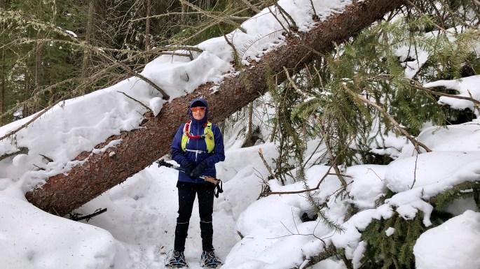 A massive fallen tree blocking the trail around Monarch Lake