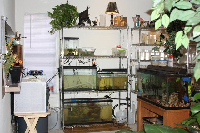 Our Fish Room (5/6)