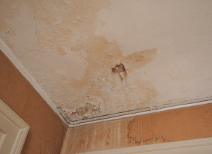 What does basement mold look like? How to tell when you have