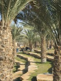Picknick in de Wadi