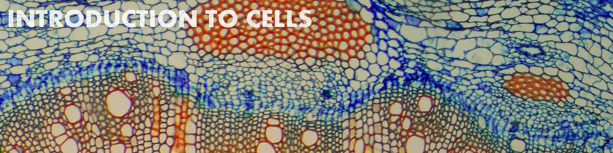 Introduction to cells