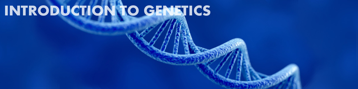 Introduction to Genetics | Basic Biology