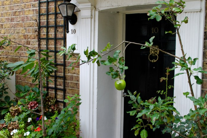An apple grows in Cornwall Mews