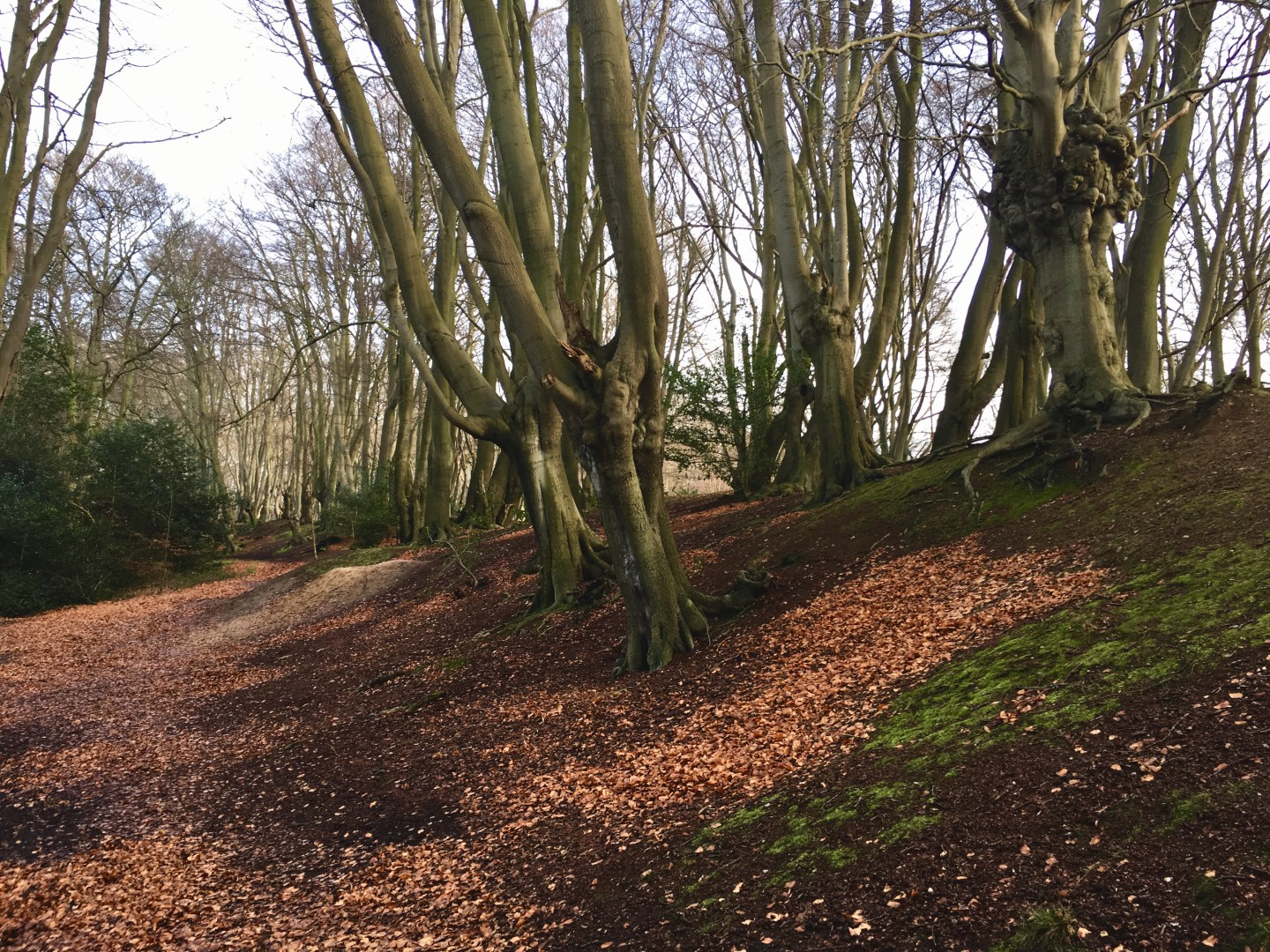 London Day Trip: Hiking in Epping Forest