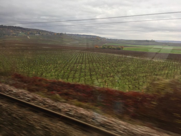 champagne vineyards from the train