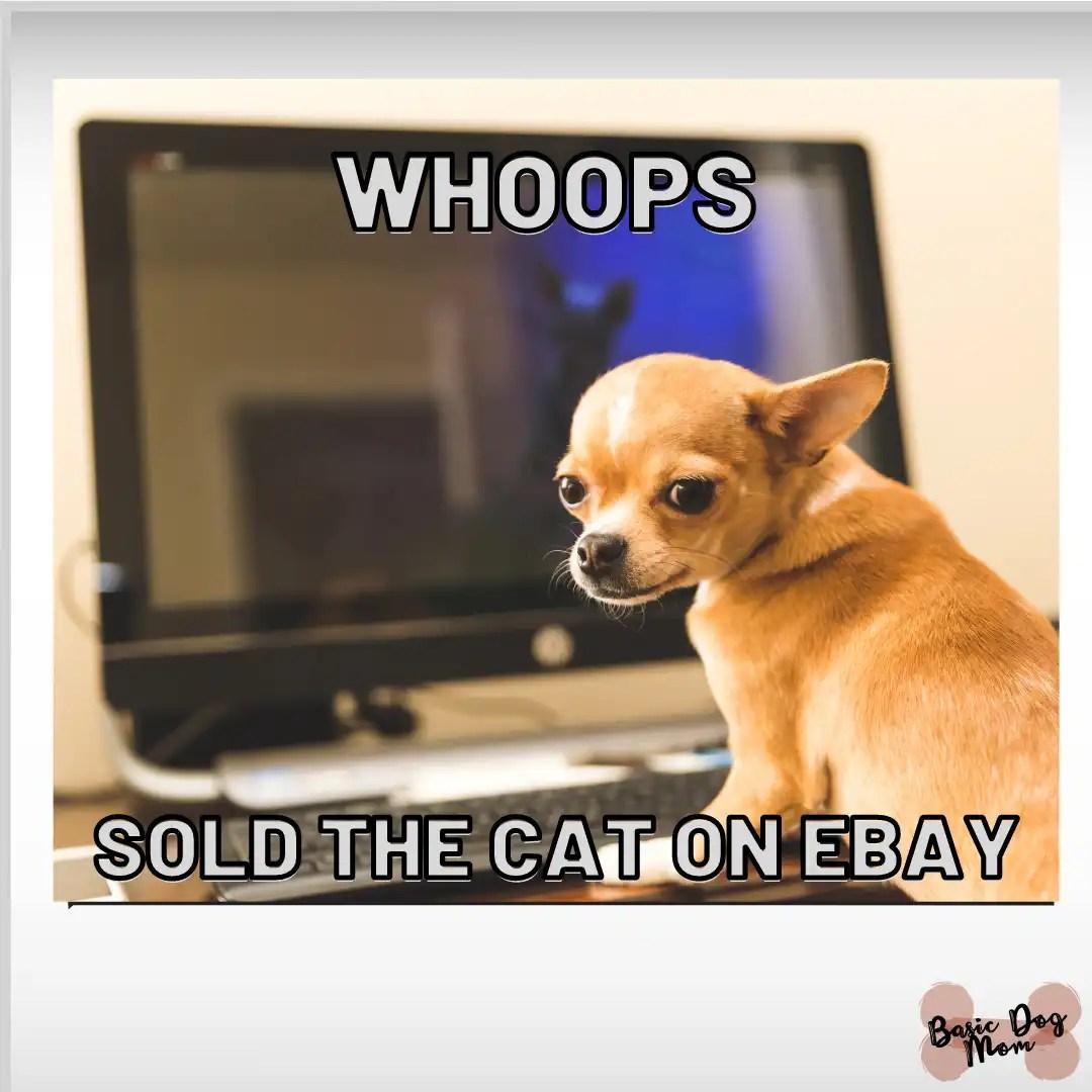 BASIC DOG MOM funny dog daily meme