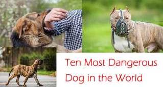 दुनिया के 10 सबसे खतरनाक कुत्ते