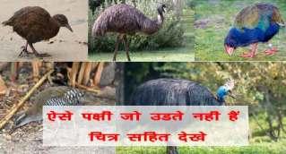 ऐसे कौन सा पक्षी हैं जो कभी उड़ नहीं सकता 11 पक्षियों के नाम चित्र सहित