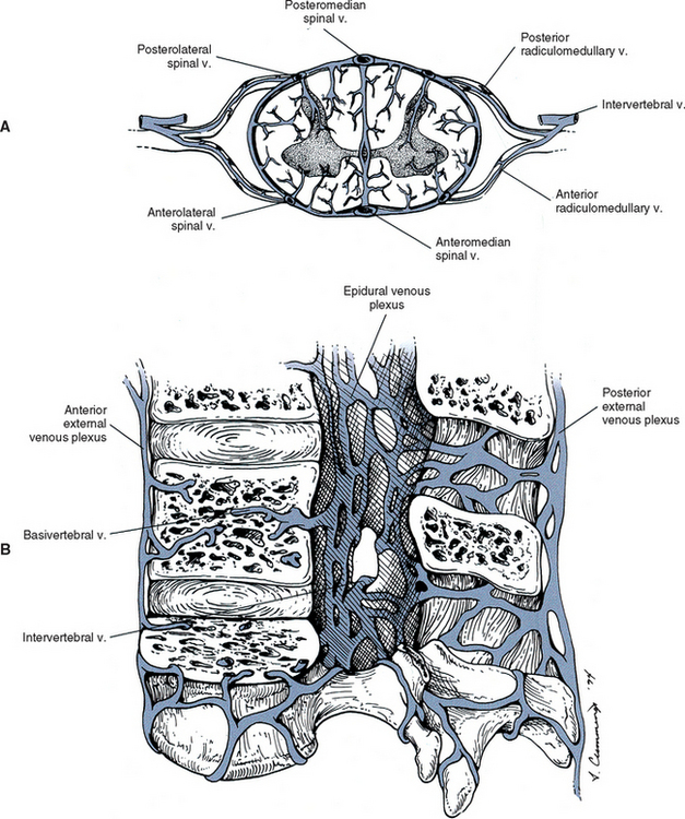 General Anatomy of the Spinal Cord | Basicmedical Key