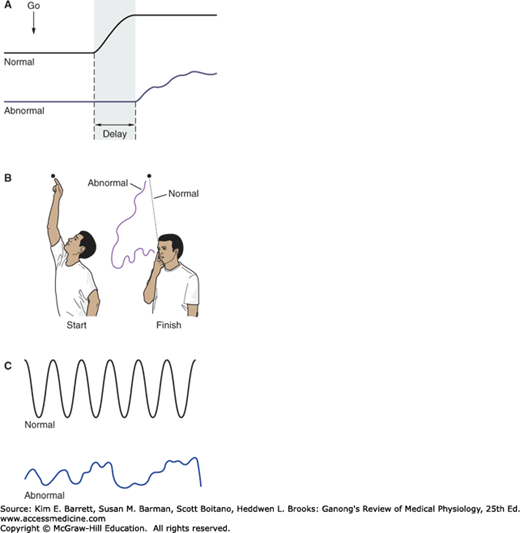 Reflex & Voluntary Control of Posture & Movement