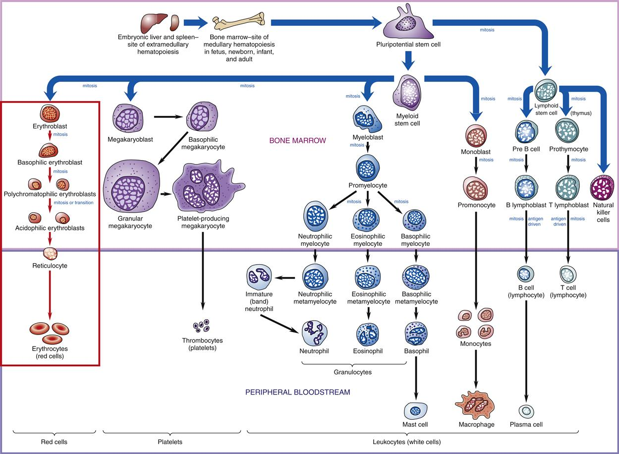 Inflammation And Immunity