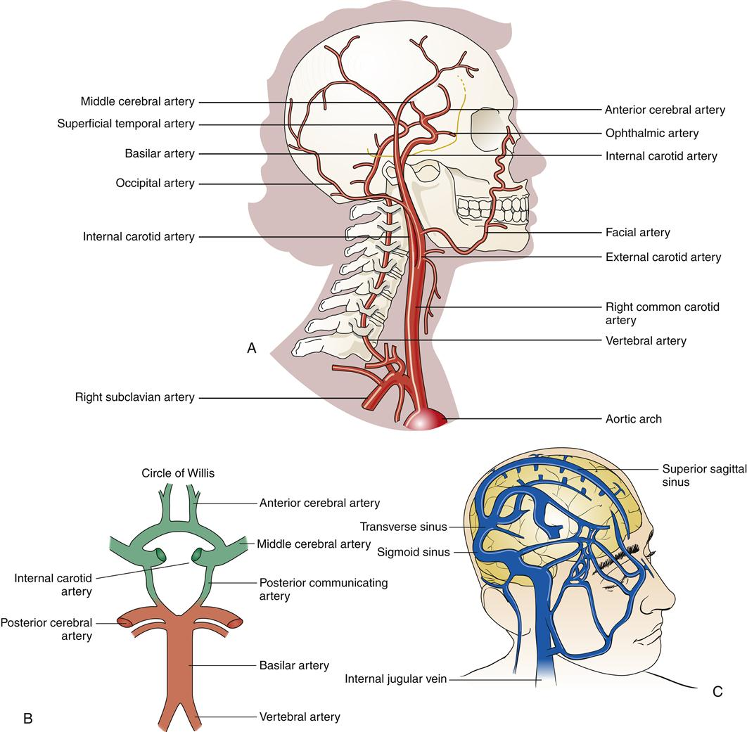 Structure And Function Of The Nervous System