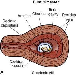 Obstetric Ultrasonography   Basicmedical Key