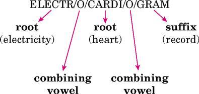 1  Basic Word Structure | Basicmedical Key