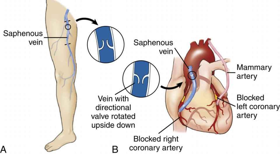 Anatomy and Physiology | Basicmedical Key