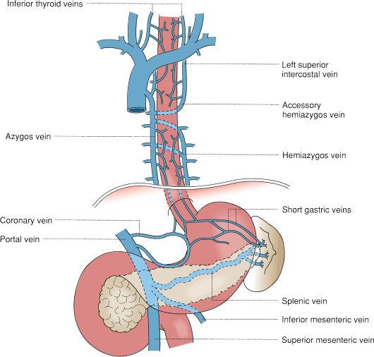 Abdominal Lymph Drainage