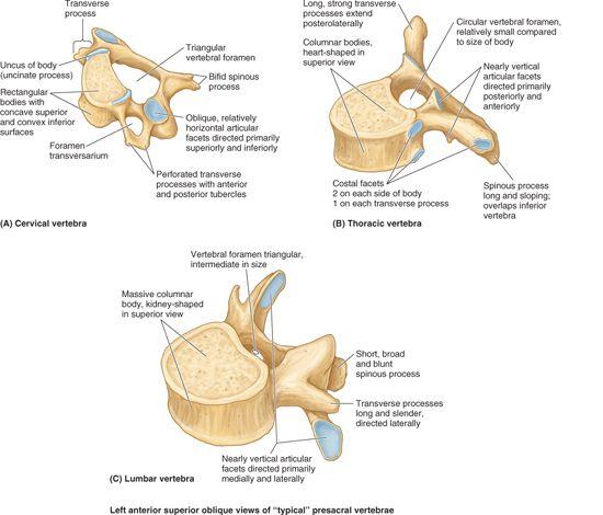 Back Basicmedical Key