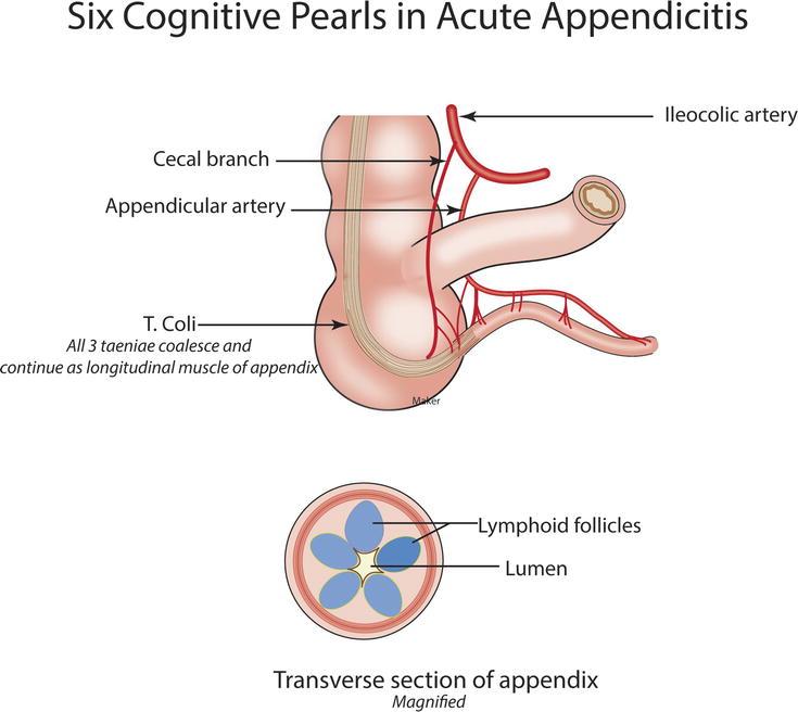 Appendix basicmedical key a3117881en14fig2htmlg ccuart Gallery