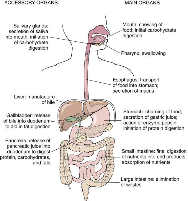 varices abdominales icd 10