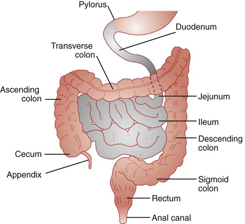 Diseases Of The Digestive System Icd 9 Cm Chapter 9 Codes 520 579 And Icd 10 Cm Chapter 11 Codes K00 K95 Basicmedical Key