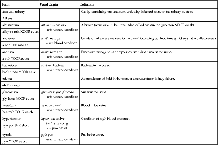 Urinary System | Basicmedical Key