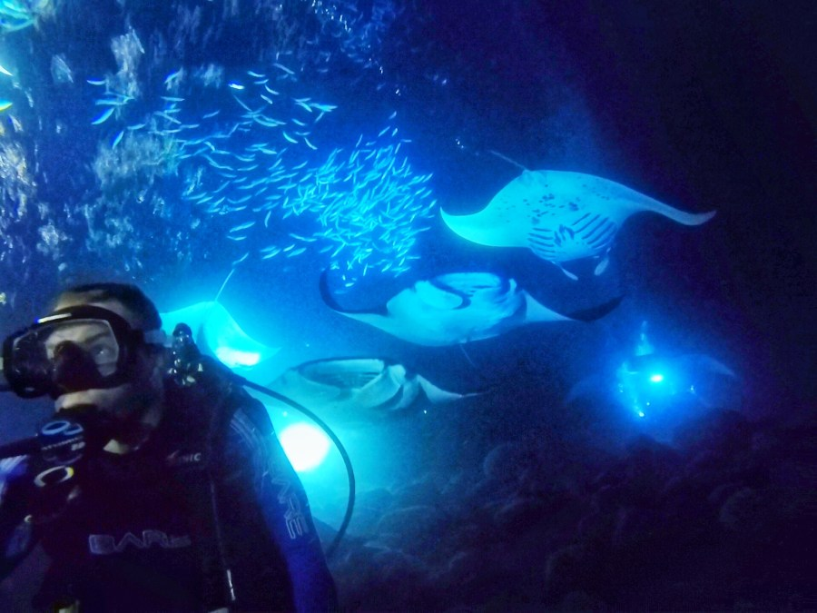 Boy scuba diving at night with 5 manta ray's and fish swimming behind him