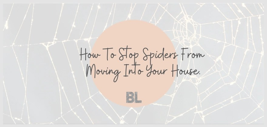 how to stop spiders from moving into your house. blog post