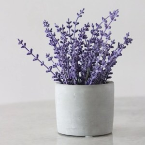 lavender how to stop spiders moving into your house