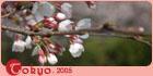 【東京】櫻‧花雨(2005.04.02-05)