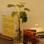 秋日品味咖啡於 FINCA COFFEE