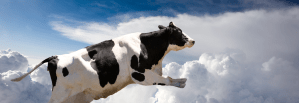 Clouds v Cows – Cloud Computing Explained
