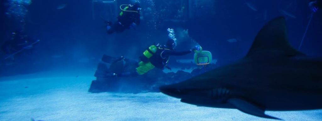 John Shurna, presentado entre tiburones como nuevo jugador amarillo