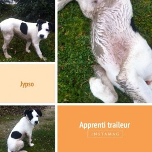 Jypso, apprenti traileur