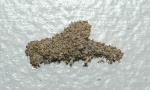 Cara Menghilangkan Rayap di Dinding Plafon Tembok Lemari
