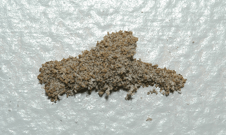 Gambar-Cara-menghilangkan-rayap-di-dinding-dan-tembok.png?fit=750%2C450&ssl=1
