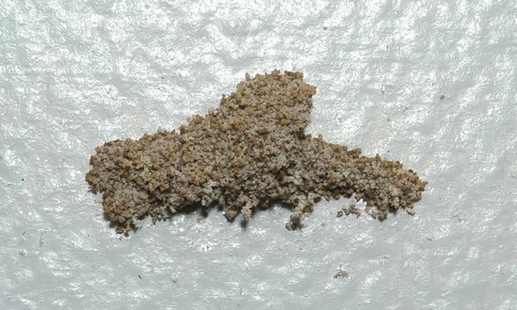Gambar Cara menghilangkan rayap di dinding dan tembok