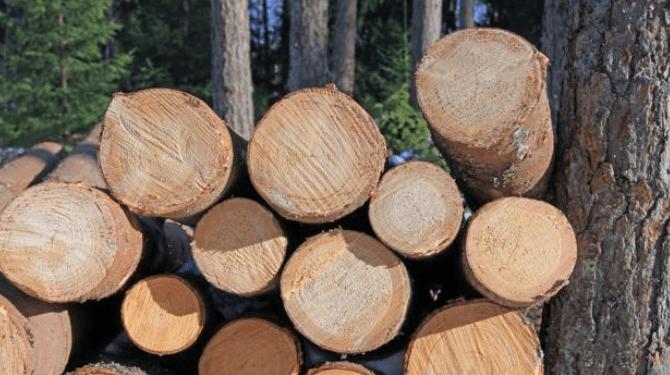 Yuk pilih bahan kayu tahan air dan rayap!